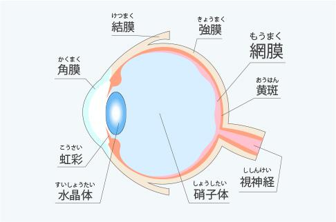 網膜硝子体疾患とは